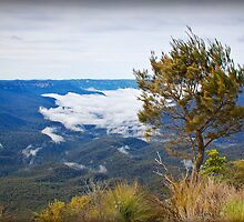 Sublime Point... Leura by JennyMac