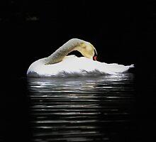 Swan by MartinMuir