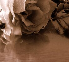 A faded rose by Joyce Knorz