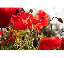 Summer Poppies Photographic Print