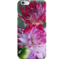 Purple Dahlias iPhone Case/Skin