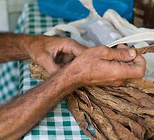 Dried tobacco leaves in man's hands by Sami Sarkis
