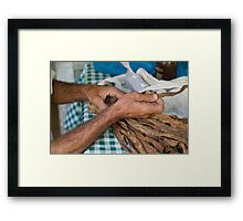 Dried tobacco leaves in man's hands Framed Print