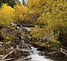 Trees dressed in brilliant fall colors surround a small waterfall by Philippe Widling