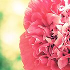 Pink Poppy 1 by Claire Elford