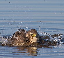Merlin Taking a Bath by Daniel Cadieux