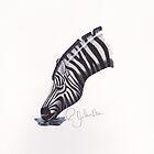 Zebra Drinking by Rob Johnston