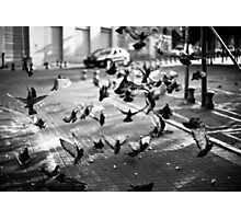 moment of takeoff Photographic Print