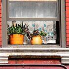 windowsill by Kodachrome 25 ASA