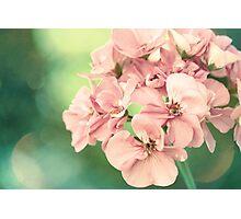 Yesterday's Flower Photographic Print