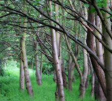 Woodland Glade by StephenRB