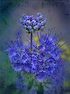 Purple Stars by Eileen McVey