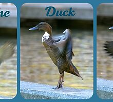 Doin' The Duck Dance...! by Carol Clifford