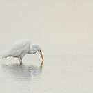 An Egret Finds Himself by Karol Livote
