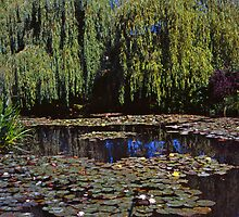 Willows and Water Lilies by Alex Cassels