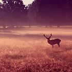 Deer at Dawn by purplejonno