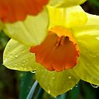 Daffodils in Spring Rain by LadyEloise