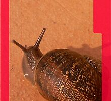 iphone case - snail. by Lynne Haselden