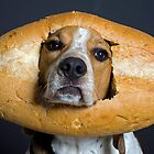 Inbread Dog by Darren Boucher