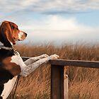 Coastal Hound by Darren Boucher