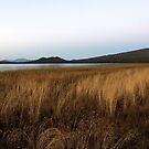 Davis Lake landscape... by Allan  Erickson