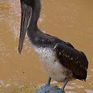 I hate rainy season - clean plumage moody water by Bernhard Matejka