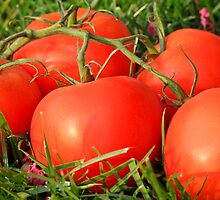 Red Tomatoes by asakura