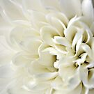 white flower - iPhone case by Gregoria  Gregoriou Crowe
