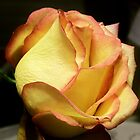 Yellow Rose Bud by shaina