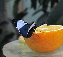 Butterfly on Grapefruit by hayleycd19