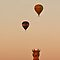 Three Balloons - iPhone case by Odille Esmonde-Morgan