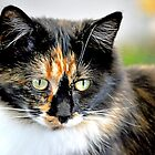 Calico Sitting on the Scratch Stand by Laurast