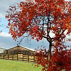 Fall in Rural Virginia by Mechelep