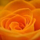 Orange Sherbet  by MaryLynn