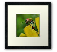 It's a bug's life ~ Framed Print
