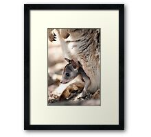 Checking it out - joey in the pouch  Framed Print