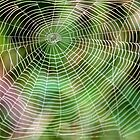 W-Windy Web.. by Stephen J  Dowdell