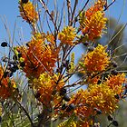 Wild Flowers of Central Australia by Lisa Evans
