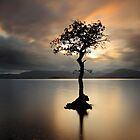 Lone tree on Loch Lomond by Photo Scotland