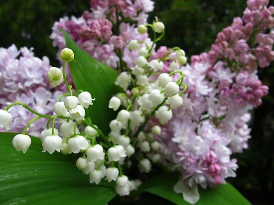 Spring harvest by MarianBendeth