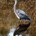 Blue Heron Reflections by Melodie Douglas