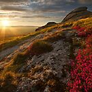 Granite, pink heather and the moor by benivory