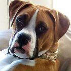 A WONDERFUL DOG........THE BOXER by Heidi Mooney-Hill