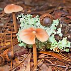 Mushrooms and Acorns by Michael Wolf