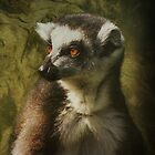 Lemur iPhone Case by Carol Bleasdale