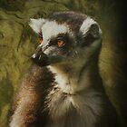 Lemur iPhone Case by Carol Bleasdale