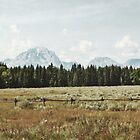 Teton Mountains by JohnOdz