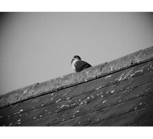 Lone Pigeon on a Roof Photographic Print