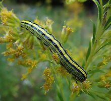 Caterpillar in camo by vigor