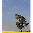 Spring in the country ~ iPhone case by Rosalie Dale